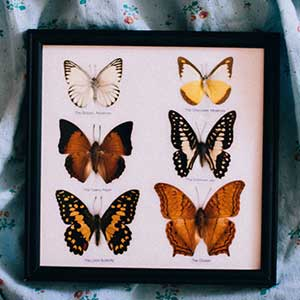 Insect specimen Collection